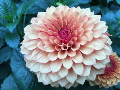 Dahlia Dreams was the theme inside of the Flower Dome
